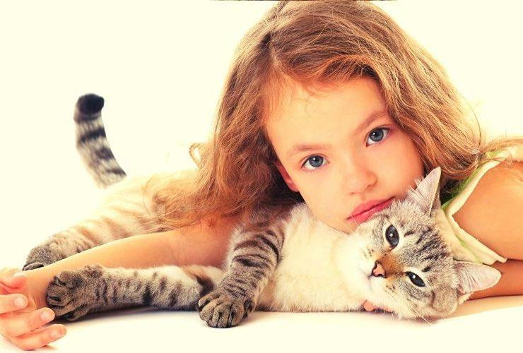 10 найдобріших і найласкавіших порід кішок