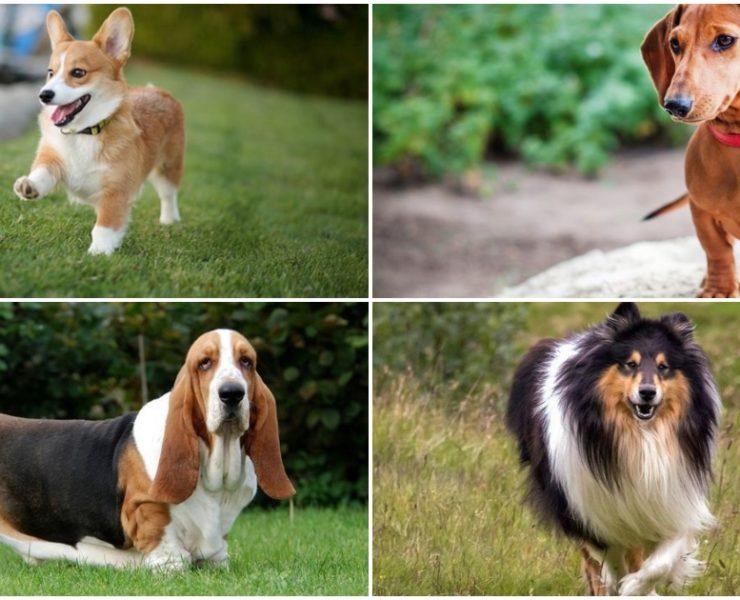 ТОП 10 найдобріших порід собак