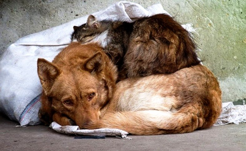 20 серпня (третя субота серпня) – Міжнародний день безпритульних тварин