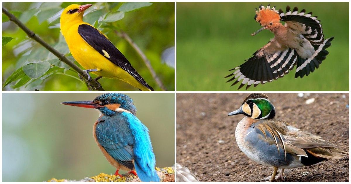 10 найгарніших птахів України: фото та опис