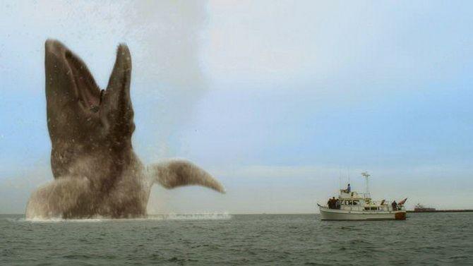 Топ-5 кращих фільмів про китів 4