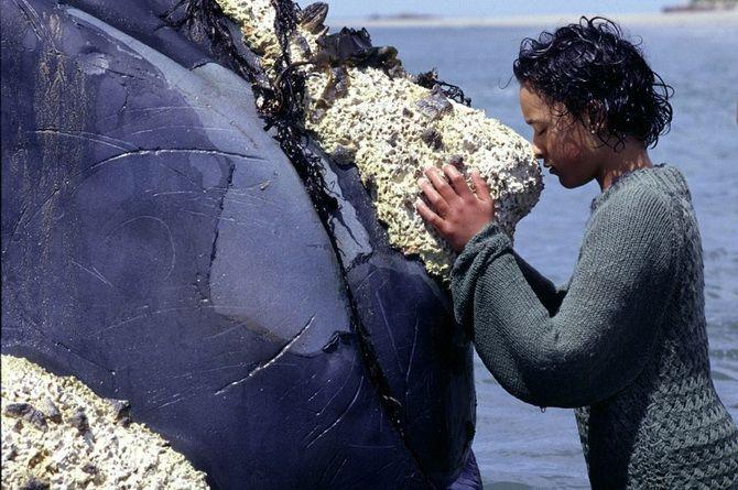 Топ-5 кращих фільмів про китів 5